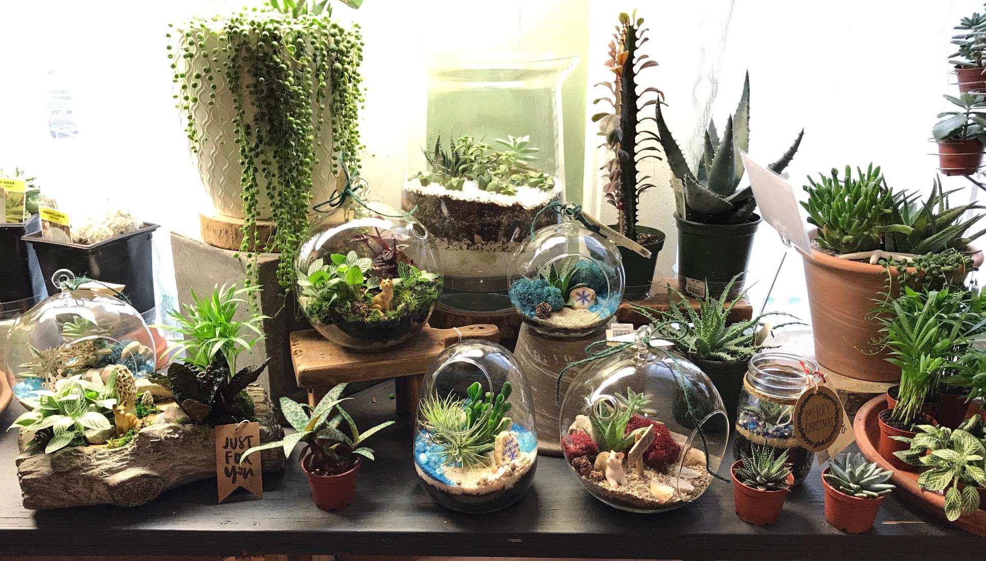 домашна градина идеи (1)