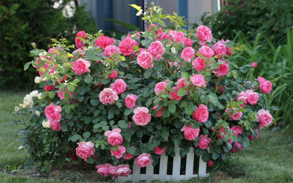 градина (2)